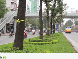 Cho thuê xe tải chuyên nghiệp tại phố Cự Lộc